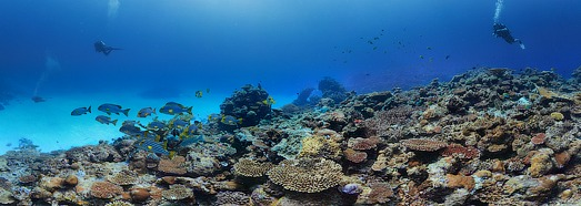 Underwater Shooting on the Maldives. Coral reefs - AirPano.com • 360 Degree Aerial Panorama • 3D Virtual Tours Around the World