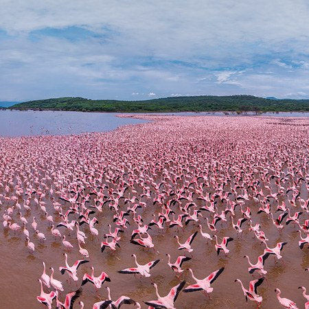 Flamingo, Kenya, Lake Bogoria