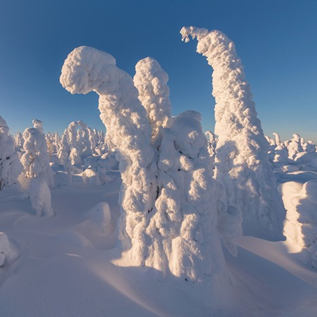 Winter Fairytale. Lapland, Finland
