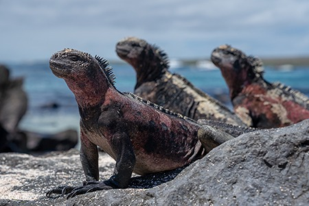 Animals of Galápagos archipelago, Ecuador