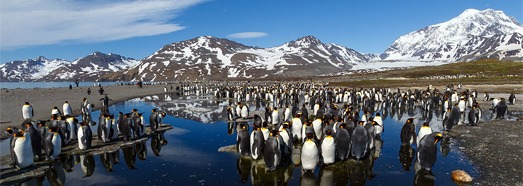 Antarctica, South Georgia Island • AirPano.com • 360 Degree Aerial Panorama • 3D Virtual Tours Around the World