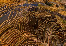 Yuanyang rice terraces #13