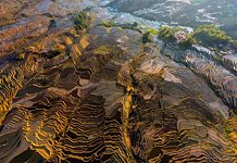 Yuanyang rice terraces #11