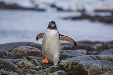 Penguins in Antarctica #19
