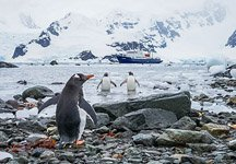 Penguins in Antarctica #5