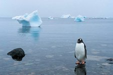 Penguins in Antarctica #47