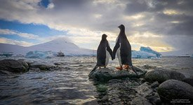 Penguins in Antarctica #1