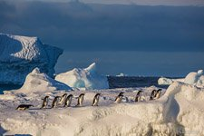 Penguins in Antarctica #30