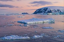 Penguins on the ice floe