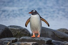 Penguins in Antarctica #21