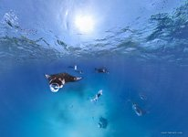 Snorkeling with manta rays #2