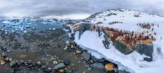 Penguins on the Useful Island, Antarctica