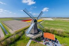 Windmill among the tulip fields