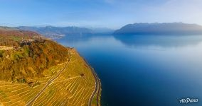 Vineyards and Lake Geneva