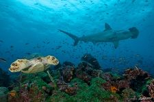 Underwater world of the Galapagos Islands