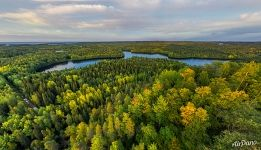 Forest of Solovetsky Islands in fall
