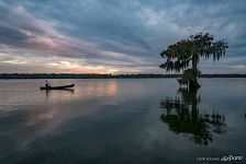Bald cypress lake