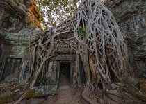 Ta Prohm temple #8