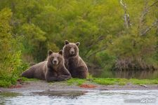 Bears couple