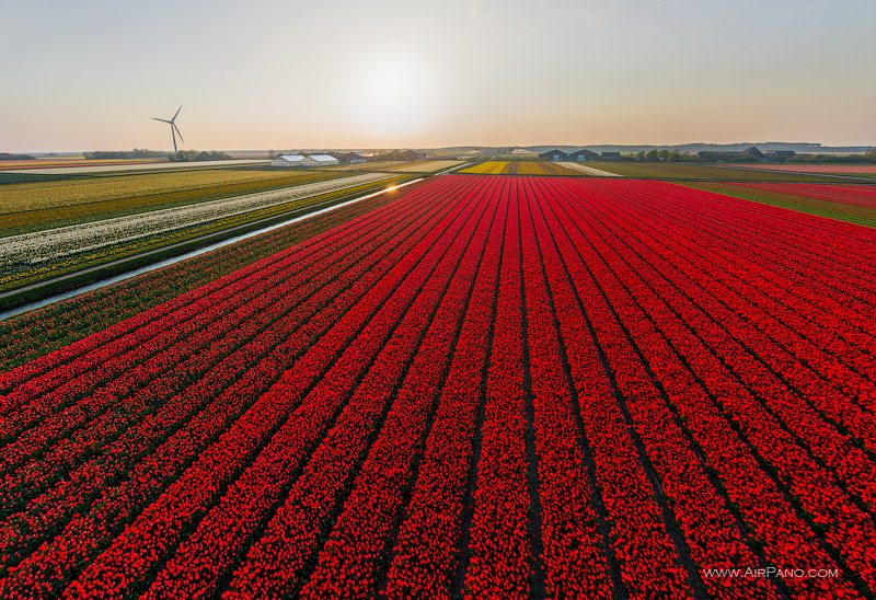 Holland. The country of tulips