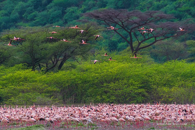 Flamingo, Kenia, Lake Bogoria