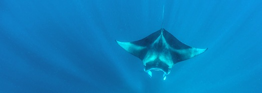 Manta Rays, Maldives - AirPano.com • 360 Degree Aerial Panorama • 3D Virtual Tours Around the World