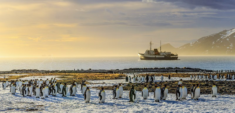 Antarctica, South Georgia Island