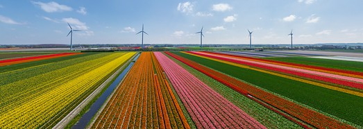 Holland. The country of tulips - AirPano.com • 360 Degree Aerial Panorama • 3D Virtual Tours Around the World