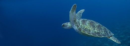 Diving with turtle - AirPano.com • 360 Degree Aerial Panorama • 3D Virtual Tours Around the World