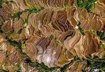 Yuanyang rice terraces #15