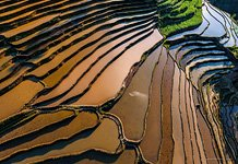 Yuanyang rice terraces #23