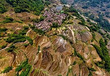 Yuanyang rice terraces #20