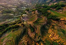 Yuanyang rice terraces #10