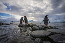Penguins in Antarctica #2