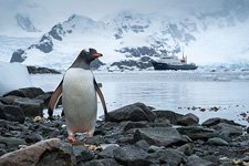 Penguins in Antarctica #45