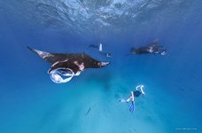 Snorkeling with manta rays #1