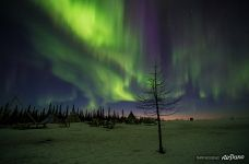 Northern Lights in Yamal