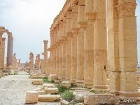 Columns in Ancient Palmyra