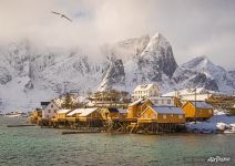 Coast of Lofoten