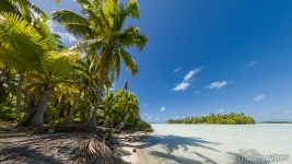 Palm trees on the shore of the Blue lagoon. Rangiroa