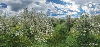 Dyakovsky Apple Orchard