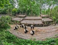Giant Panda Cub Enclosure