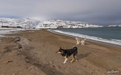 With true friends on the southern coast of the Arctic Ocean