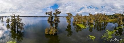 Cypress lake in Louisiana