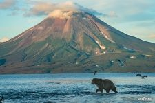 Bear and Ilyinsky Volcano